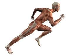 Comment améliorer sa tonicité musculaire ?